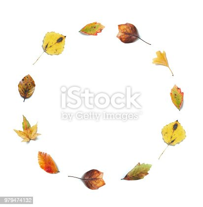 Autumn background with colorful (maple, birch, linden, ginkgo) leaves in a shape of a circle on white background.