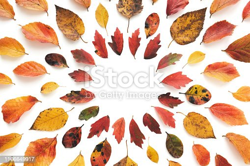 Frame made of colorful autumn leaves on white background. Flat lay. Copy space.