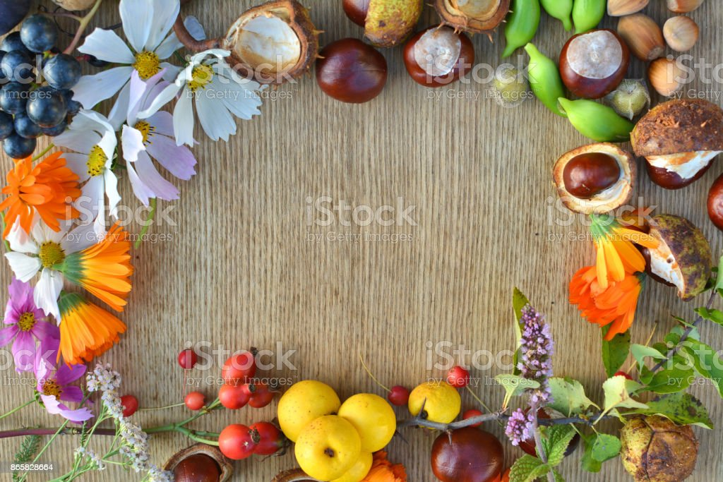 Autumn frame made of flowers, fruits and nuts stock photo