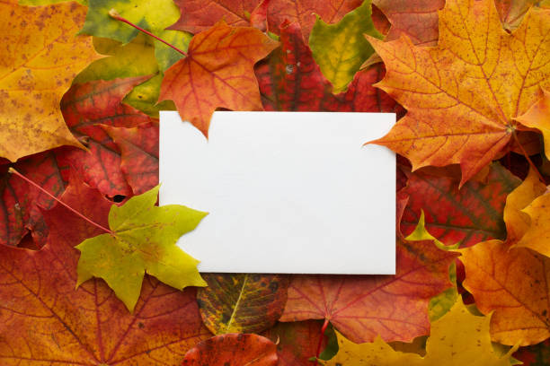 autumn frame made of leaves with white frame. flat lay, top view. - september stock photos and pictures