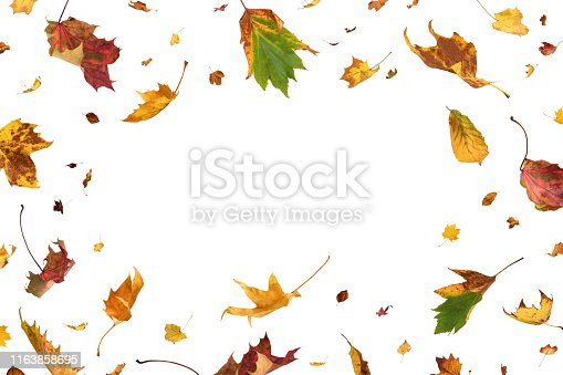 Falling autumn leaves on white background with copy space in the middle.