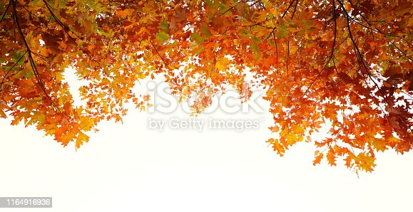Autumn foliage on white.