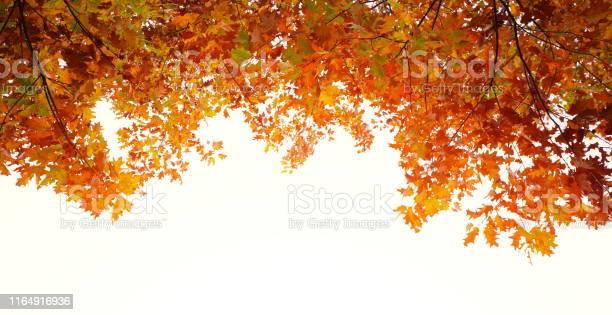 Photo of Autumn Frame