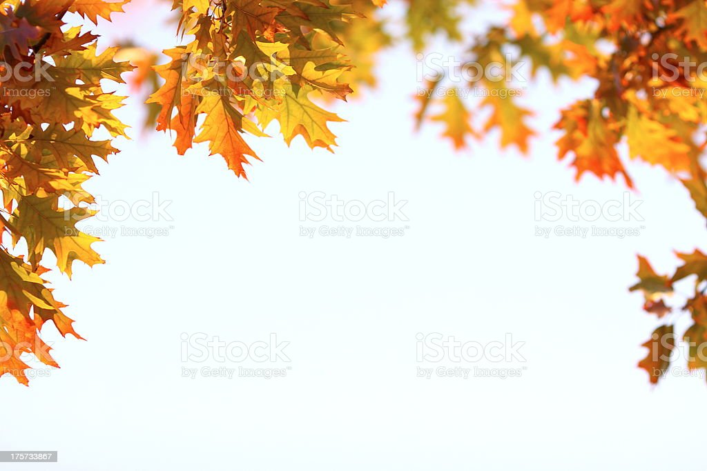 Autumn Frame stock photo