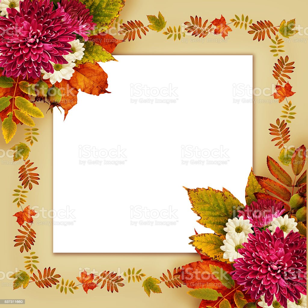 Autumn Frame With Dry Leaves And Aster Flowers Bouquets Stock Photo