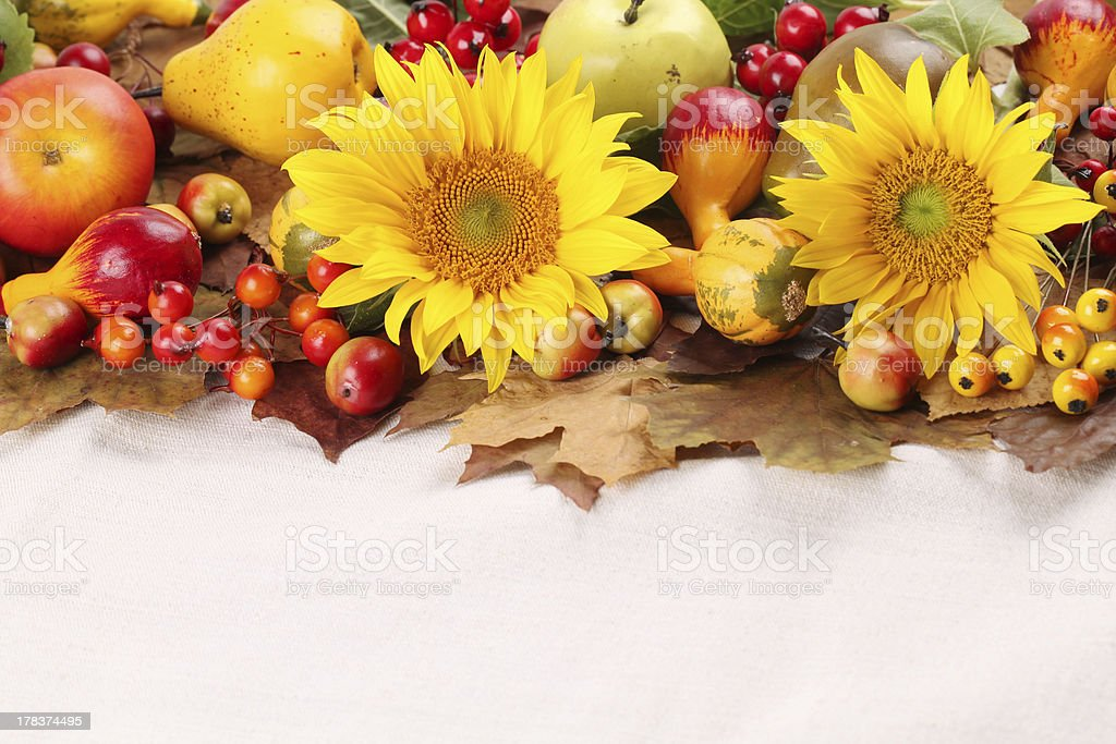 Autumn frame with fruits,pumpkins and sunflowers royalty-free stock photo