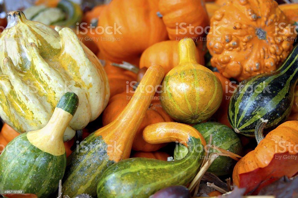 Autumn Fresh royalty-free stock photo