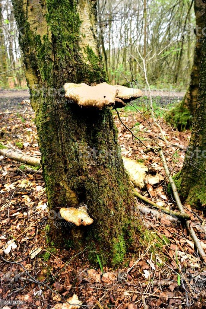 Autumn Fruiting Fungi stock photo