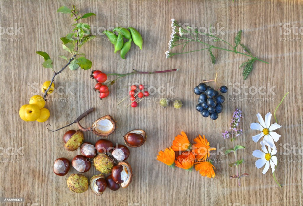 Autumn fruits, chestnuts and herbs stock photo