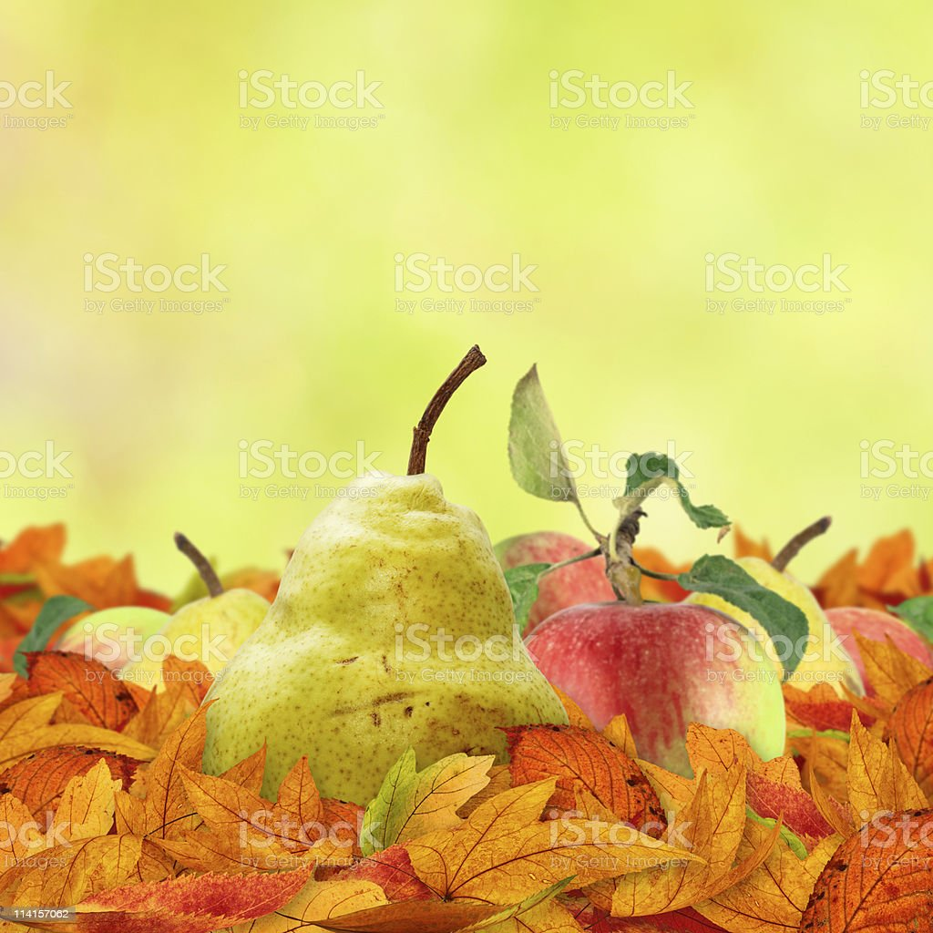 Autumn Fruits royalty-free stock photo