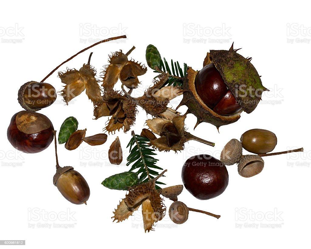 Autumn fruits foto royalty-free