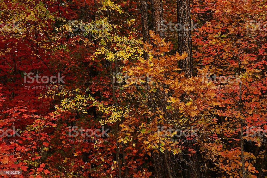 Herbst Fury Lizenzfreies stock-foto