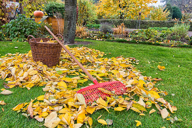 Herbst-Garten – Foto