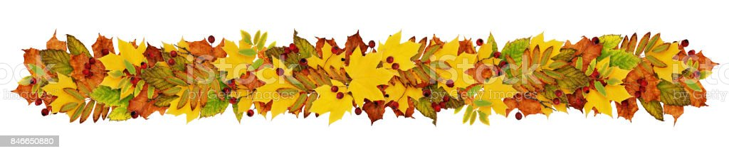 Autumn garland fron colorful leaves and berries stock photo