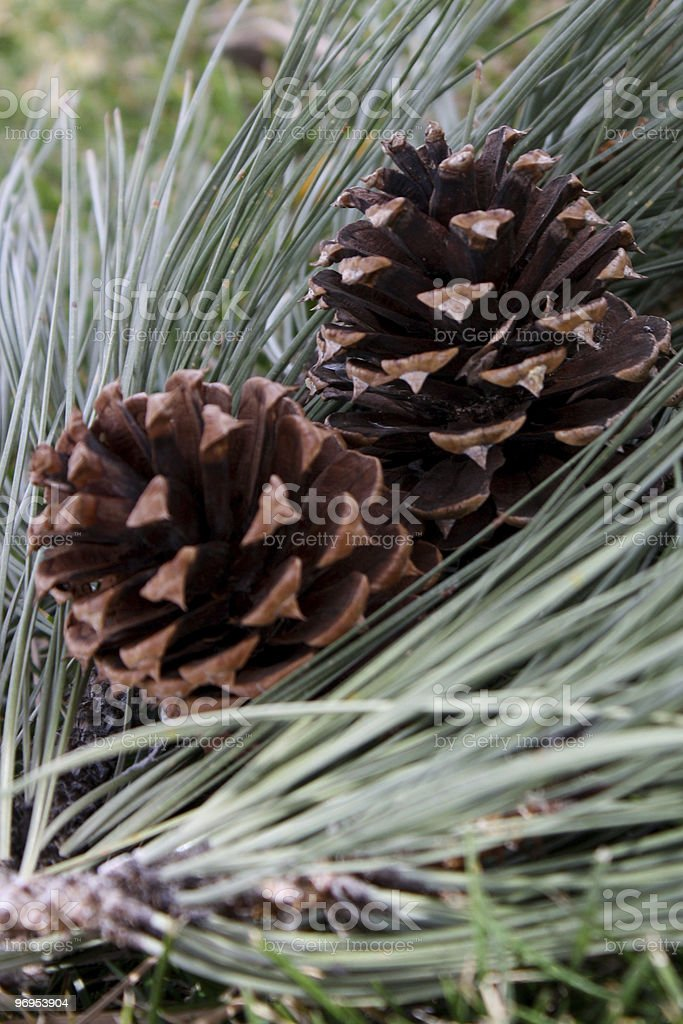 Autumn Gifts royalty-free stock photo