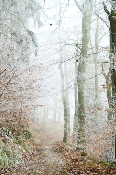 hösten ger vika för vintern - bernkastel kues höst bildbanksfoton och bilder