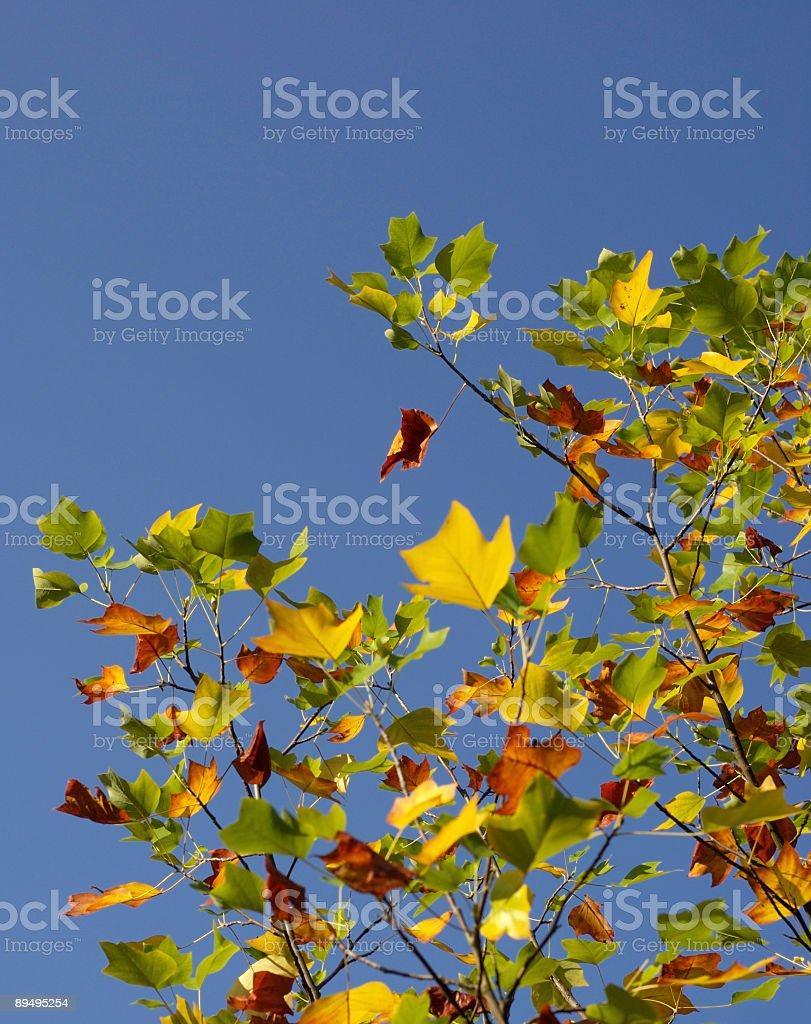 Autumn Glory royalty-free stock photo