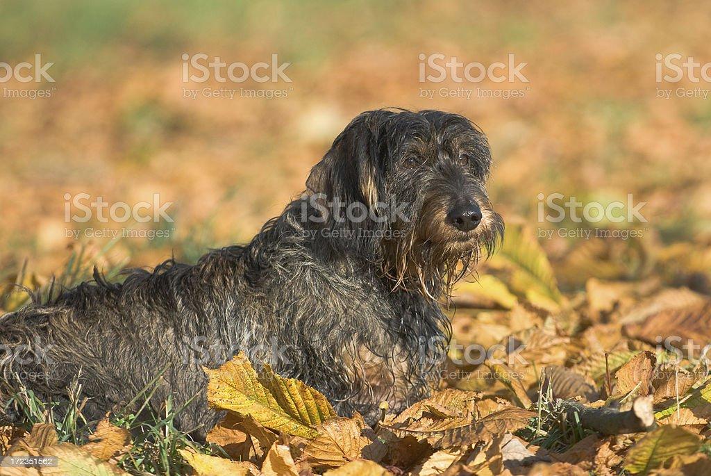 Autumn glow royalty-free stock photo