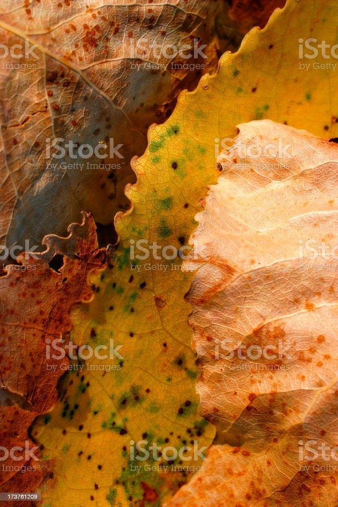 Autumn Gold III royalty-free stock photo