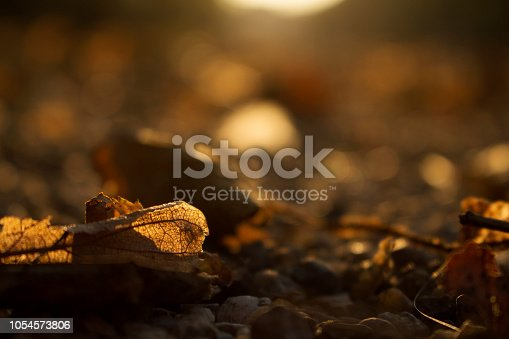 istock Autumn Golden Brown Leaves at Sunset Blurred Background 1054573806