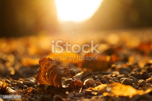 istock Autumn Golden Brown Leaves at Sunset Close Up 1054574232