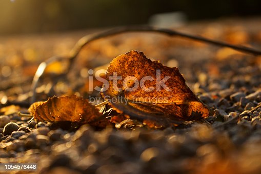 istock Autumn Golden Brown Leaves at Sunset Close Up 1054576446