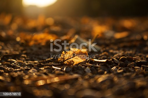 istock Autumn Golden Brown Leaves at Sunset Close Up 1054576510