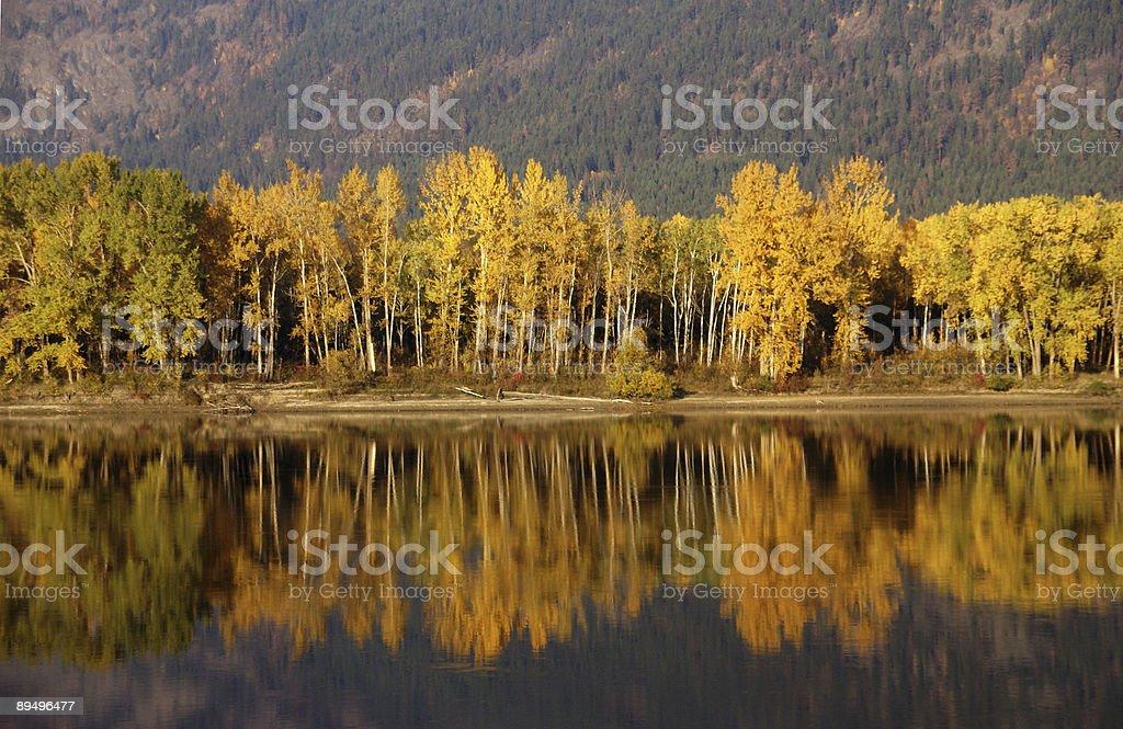 Jesienią drzewa, złoty zbiór zdjęć royalty-free