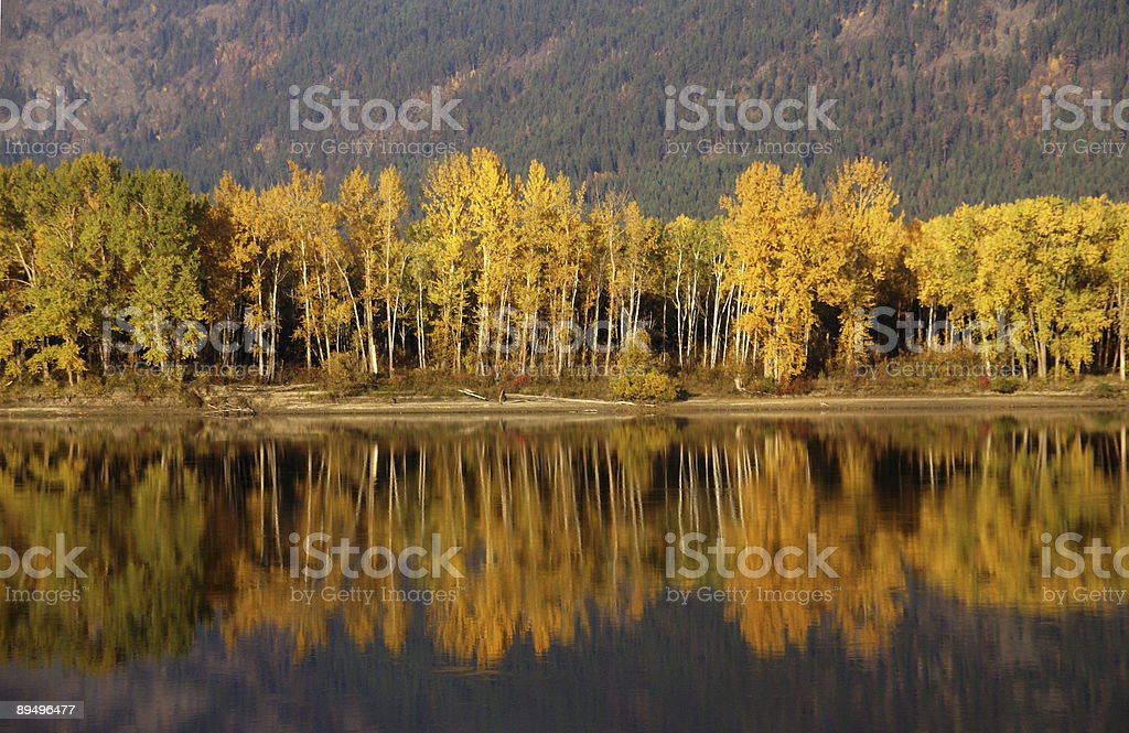 Autumn, golden trees royalty free stockfoto