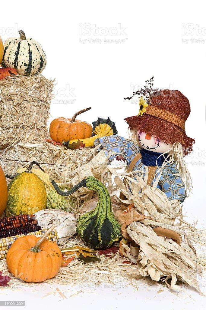 Autumn Gourds royalty-free stock photo