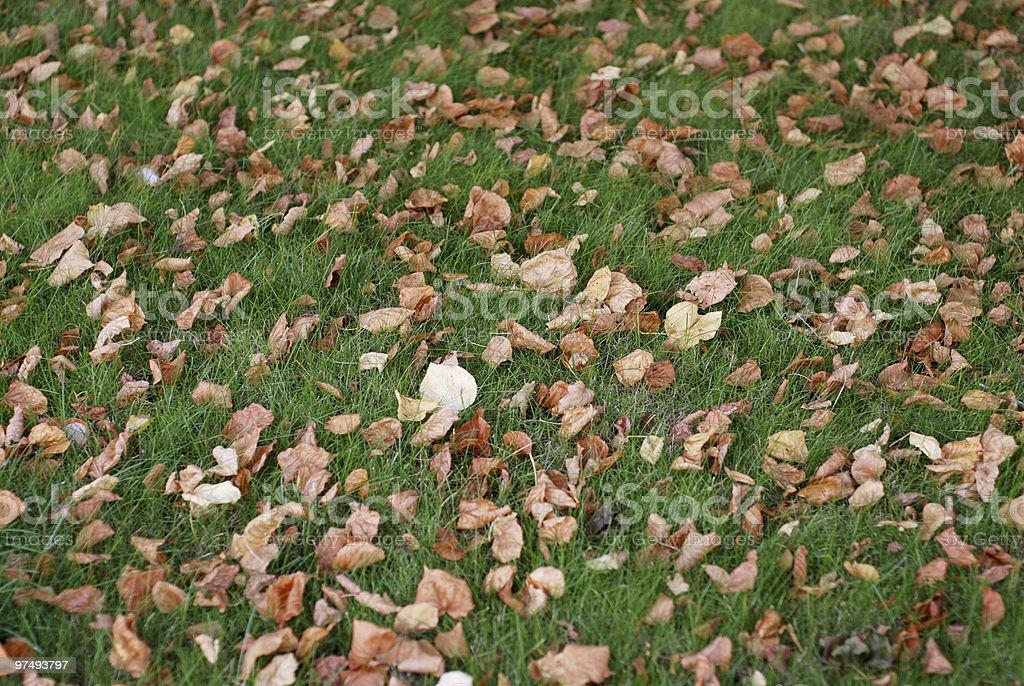 Autumn grass background royalty-free stock photo