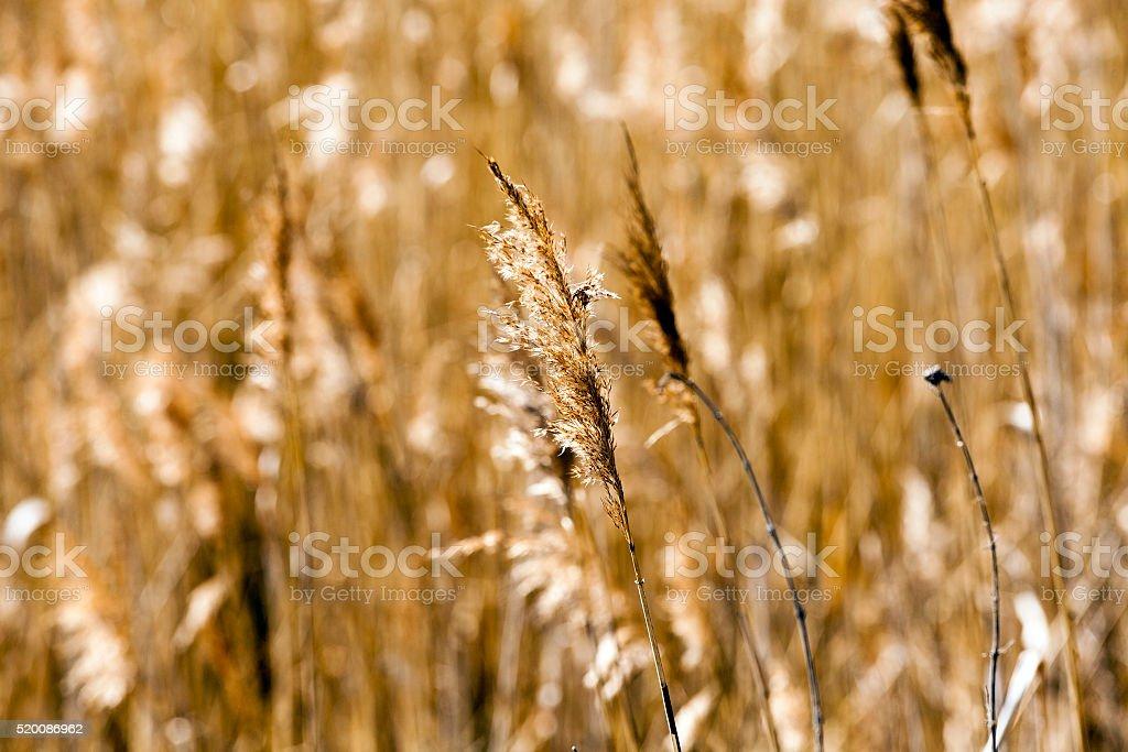 autumn grass ,  close-up stock photo