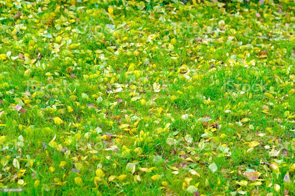 Autumn grass stock photo