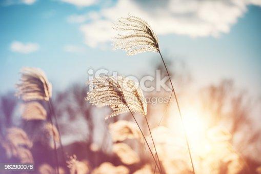 istock Autumn Grass 962900078