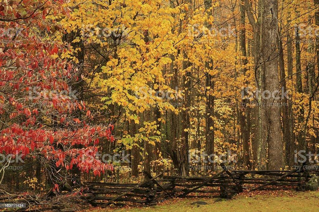 autumn, great smoky mountains stock photo