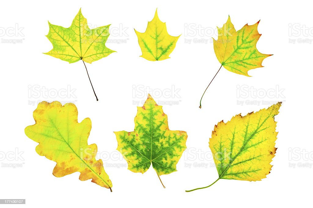 Autumn green and yellow leaves stock photo