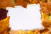A blank card with copy space and gold border, surrounded with golden autumn leaves.