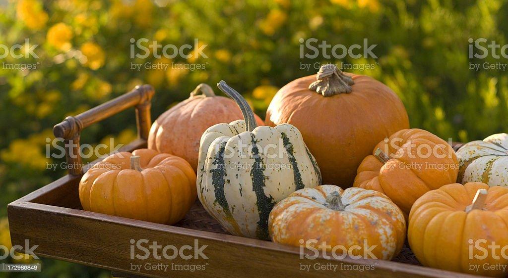 Autumn Halloween Pumpkins & Gourds Outdoors royalty-free stock photo