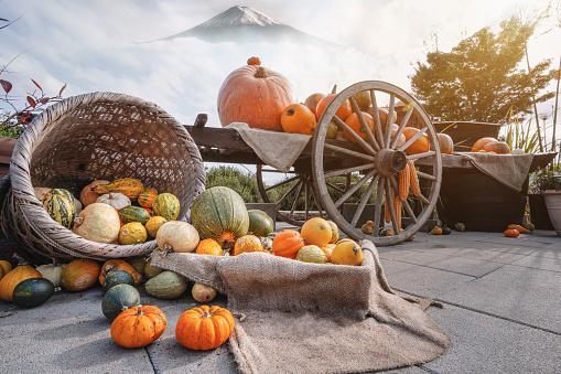 Autumn sensation with harvest vegetables in the basket