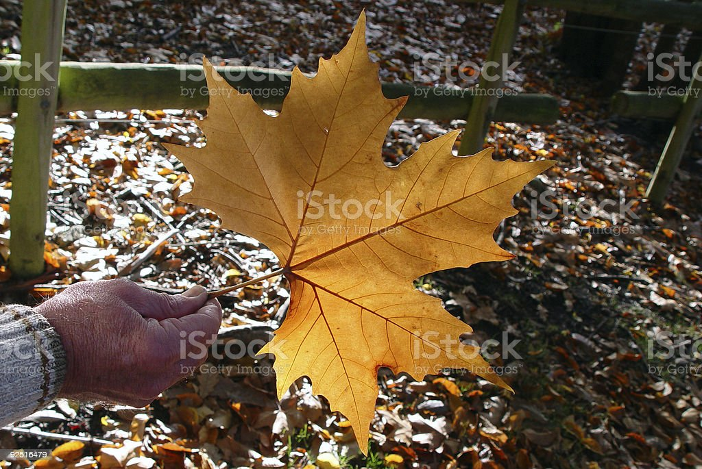 Autumn hand and leaf royalty-free stock photo