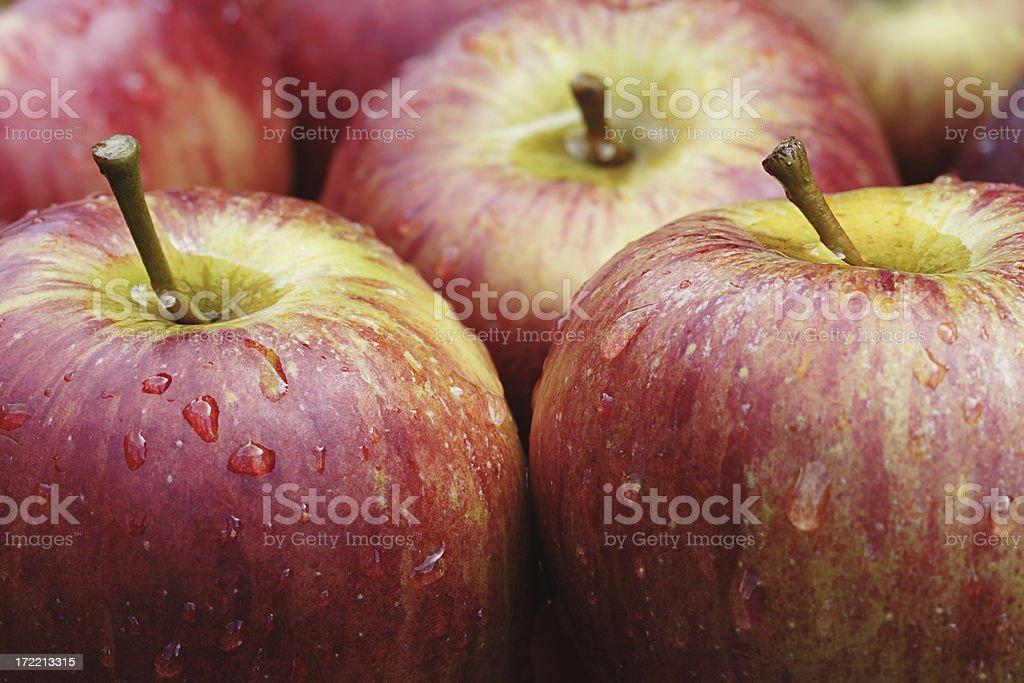 Autumn Harvest Apples stock photo