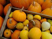 秋の収穫祭 - ハロウィン - 感謝祭: カボチャ、骨髄、グールドのカラフルなアレンジ。