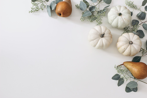 Autumn harvest frame, web banner. Pear fruit and white pumpkins isolated on white table background. Fall, Thanksgiving pattern. Flat lay, top view, garden crop.