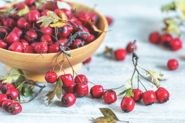 Autumn harvest Hawthorn berry with leaves in bowl on a light wooden table background stock photo