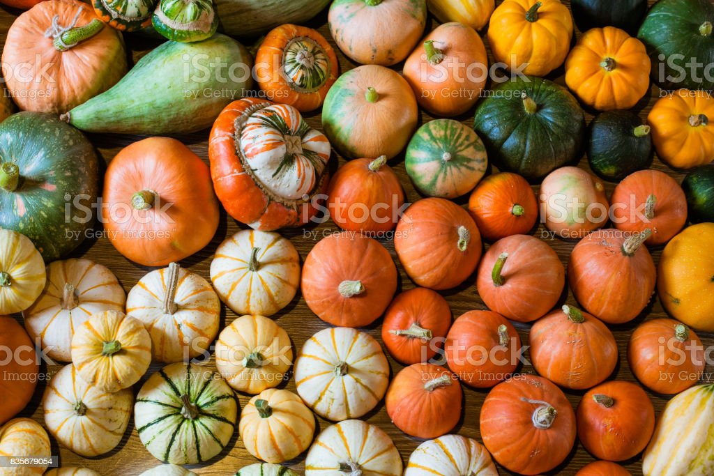 Autumn harvest of squshes and pumpkins stock photo