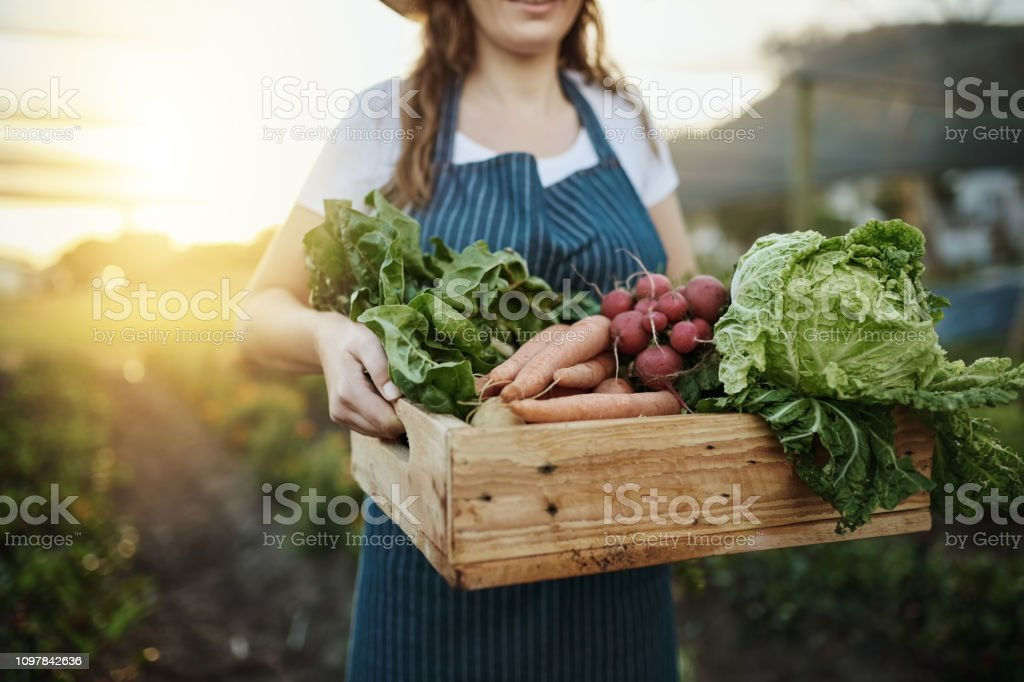 Autumn harvest Cropped shot of an unrecognizable young woman working on her self owned farm Active Lifestyle Stock Photo