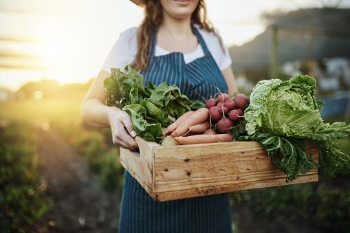 Autumn Harvest Stock Photo - Download Image Now