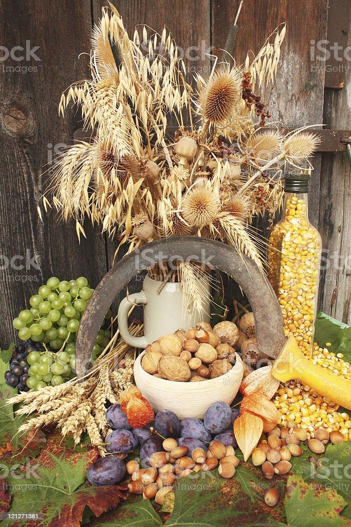 Autumn harvest royalty-free stock photo