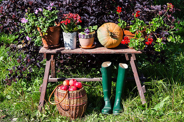 autumn harvest Autumn harvest. Pumpkin, apples and flowers lie on the bench. russian dacha stock pictures, royalty-free photos & images