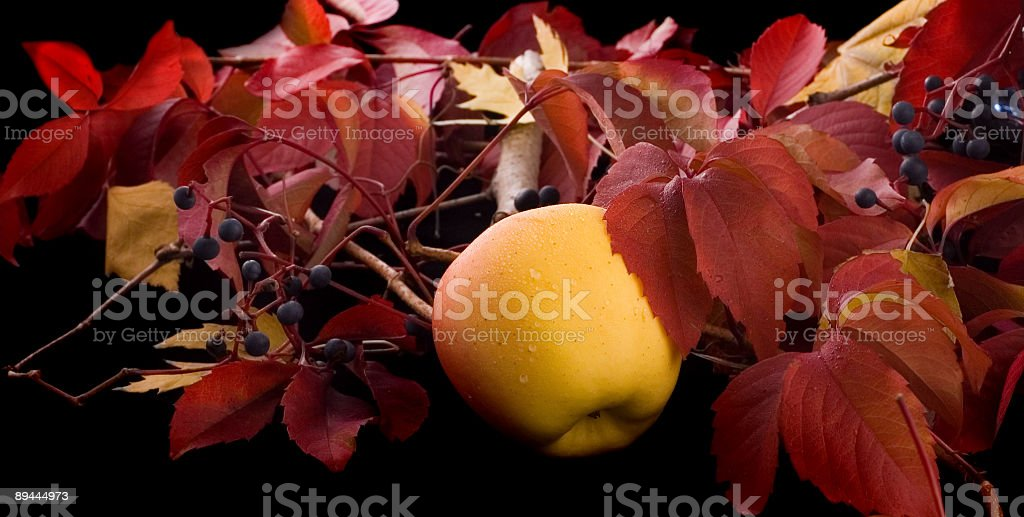Autumn harvest royalty-free stock photo